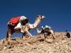 Sinai Traverse